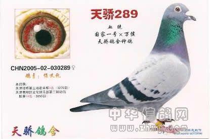 0289 中华信鸽网拍卖中心
